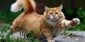 Usai Gigit Seorang Wanita, Ular Ini Dibunuh Kucingnya