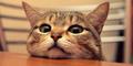 Ternyata Pelihara Kucing Bisa Usir Ular Dari Rumah
