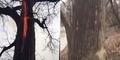 Video Api Berkobar Dalam Batang Pohon Hebohkan Netizen
