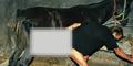 Zoophilia Bikin Pria di Swiss Gemar Memperkosa Kuda