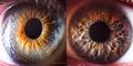 20 Foto Close Up Mata Menakjubkan Karya Suren Manvelyan