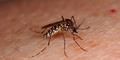 5 Cara Tepat Cegah Virus Zika