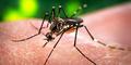 Menguak Virus Zika Yang Mirip Demam Berdarah