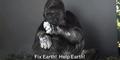 Video Gorila Minta Manusia Jaga Lingkungan