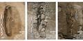 3 Makam Kuno Tentara Islam Ditemukan di Prancis