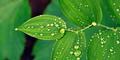 5 Manfaat Sehat Air Embun
