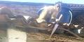 Aksi Monyet Mabuk Bawa Pisau Teror Warga Brasil