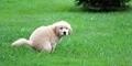 Alasan Anjing Menatap Kita Saat Buang Air Besar