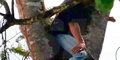 Balada Kejang Otot, Pria ini Nyangkut di Pohon Petai