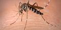 Cara Mudah Buat Rumah Bebas Nyamuk
