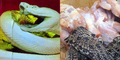Foto: Menu Restoran Chinju-ya Jepang Bikin Ngeri Bergidik