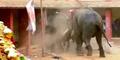 Video Gajah Liar Ngamuk Rusak Rumah Warga India