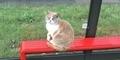 Warga Inggris Berduka, Kucing 'Penunggu Halte Bus' Missy Meninggal