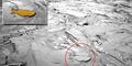Ditemukan Fosil Hiu di Mars?