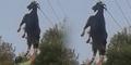 Kasus Paling Misterius: Kambing Nyangkut Kabel Tinggi 6 Meter