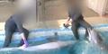 Penjaga Kebun Binatang Terekam Main Seks dengan Lumba-lumba
