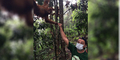 Leonardo DiCaprio Pamer Foto Bareng Orangutan di Aceh