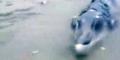 Nelayan China Heboh Mancing Dapat Ikan Kepala Buaya