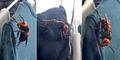 Ngeri, Tawon Mematikan di Jepang Ini Seukuran Burung