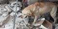 Usai Selamatkan 7 Korban Gempa, Anjing Ini Stroke Lalu Mati