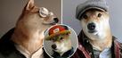 Foto Bodhi, Anjing Modis Pesaing Kuat David Beckham
