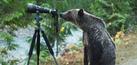 Aksi Unik Monyet Hingga Beruang Jadi Fotografer