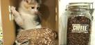 Persahabatan Lucu Bayi Burung Hantu & Anak Kucing
