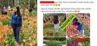 Kumpulan Meme Konyol Sindir Perusak Taman Bunga Amarillys