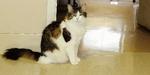 Oscar, Kucing Ajaib Bisa Deteksi Kematian Seseorang