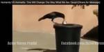 Video Perilaku Hewan Lebih Baik daripada Manusia