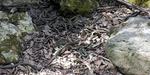 Video: Narcisse Snake Pit, Kolam Berisi 250.000 Ular
