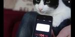 Merlin, Kucing Dengan Dengkuran Terkeras di Dunia