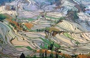 Jangan Tertipu! Ini Bukan Lukisan Tapi Sawah Nyata di Yuanyang