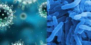 Kisah 7 Penyakit Menular Paling Mematikan