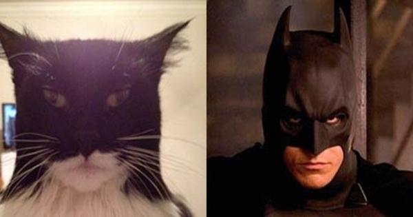 Foto Lucu Ekspresi Wajah Kucing Ini Mirip Batman