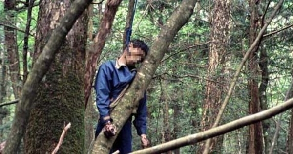 hutan aokigahara lokasi favorit bunuh diri di jepang